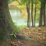 Piękny oraz {zadbany zieleniec to nie lada wyzwanie, zwłaszcza jak jego konserwacją zajmujemy się sami.